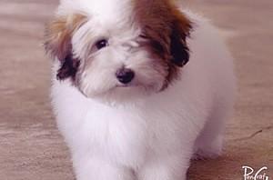 Bono's Puppy Photo